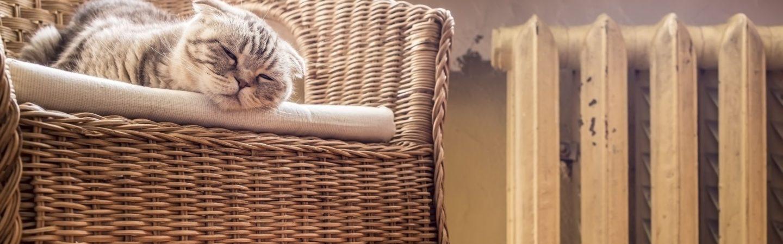 sweet cat sleeps on a chair near the heated radiator