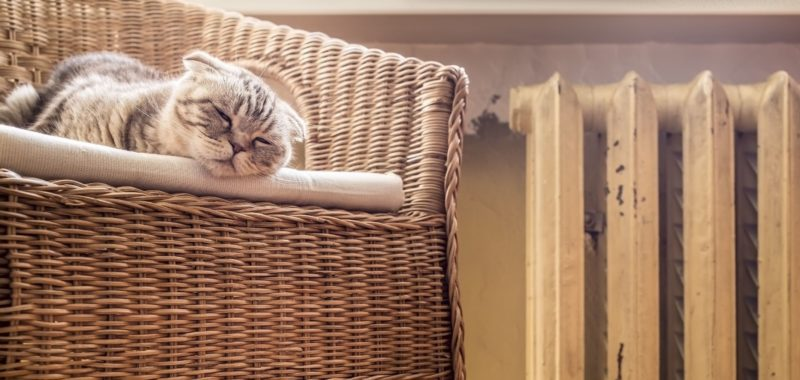 sweet cat sleeps on a chair near the heated radiator