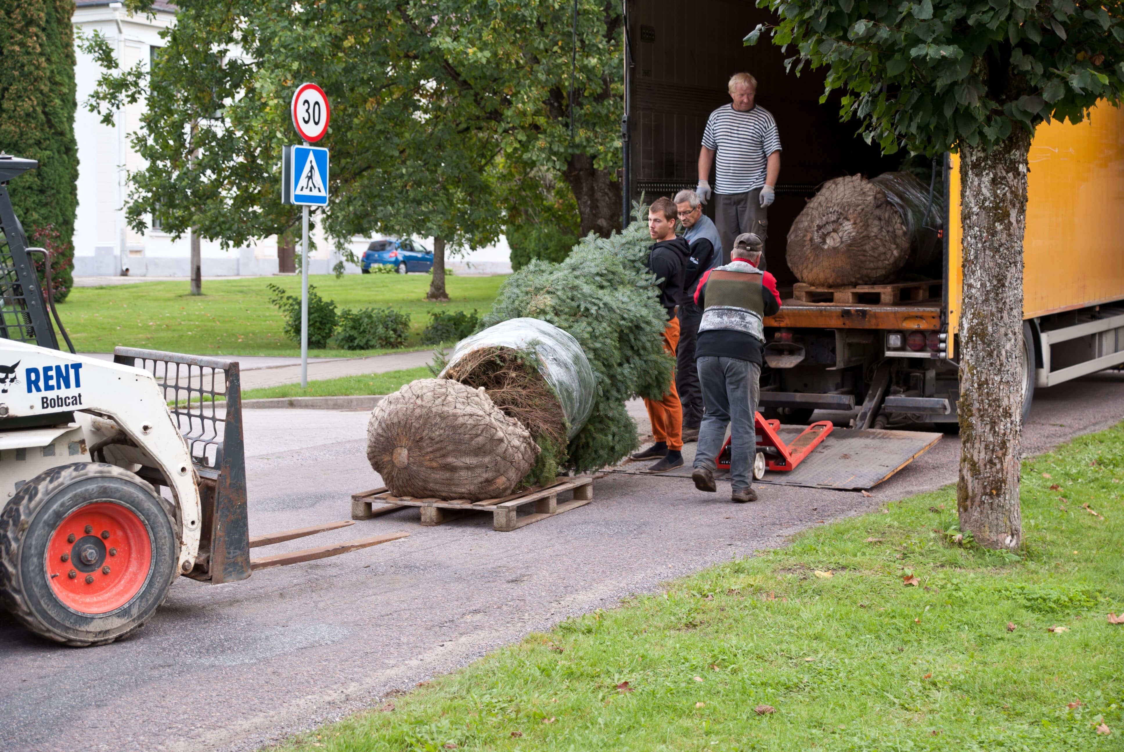 Türil said septembrikuus paika SW Energia kingitud puud